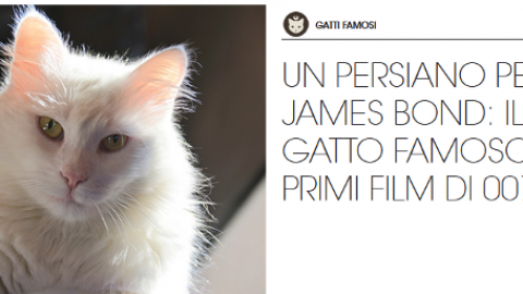 Gatti famosi: il gatto cattivo nei film di James Bond – Petpassion.tv