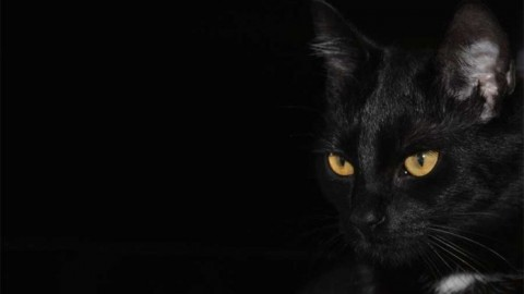 17 Novembre: Gatto nero Day – ArezzoWeb.it