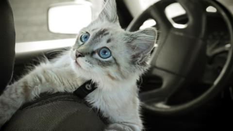 Quixa protegge gli animali in auto – Insurance Trade