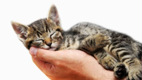Quante ore dorme un gatto? – DeAbyDay.it (Blog)