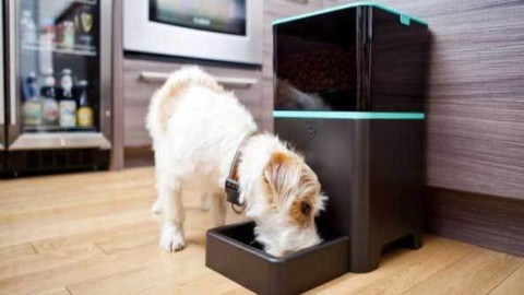 Distributore automatico di cibo per cani, a cosa serve? – Bsnews.it