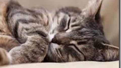 Nefropatia cronica felina (CKD): terapia