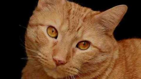 A spasso col gatto al guinzaglio – Wired.it