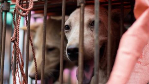 Festival di Yulin: perchè bisogna fermare il massacro dei cani – Panorama