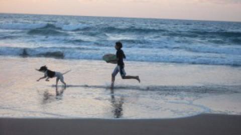 Sull'isola con il cane o altri animali: regolamenti – GiglioNews