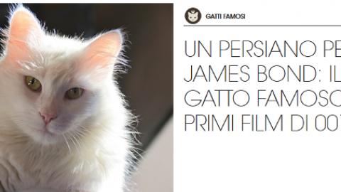Gatti famosi: il gatto cattivo nei film di James Bond – Petpassion.tv