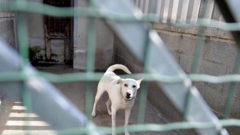 """L'abbandono dei cani costa 200 mln Lav: """"Un peso per tutta la … – TGCOM"""