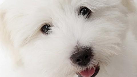 Perché i cani abbaiano?   Petpassion Blog – Petpassion.tv