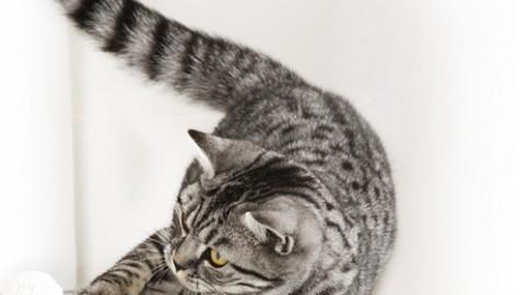 Intolleranze alimentari nei gatti: sintomi e rimedi – Petpassion.tv