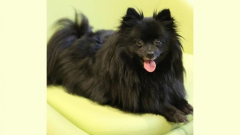 Ecco il cane che ipnotizza le persone: prova a guardarlo! – Radio 105 – 105.net