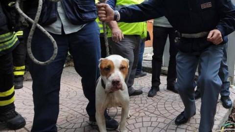 «Basta abusi sugli animali», cani – Corriere del Mezzogiorno