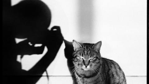 Il gatto nell'obiettivo di grandi fotografi in mostra a Parigi – Clickblog.it (Blog)