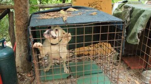 Orrore a Tivoli: lascia il cane in una pensione e muore, poi la … – RomaToday