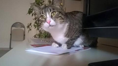 San Lorenzo a Pagnatico, paura per i gatti: Lucy torna a casa con un … – PisaToday