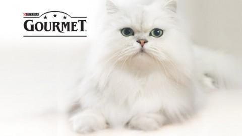 Gatti: GOURMET Perle in promozione su Tutto Giardino! – Petpassion.tv