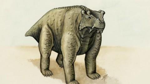Questo è stato il primo animale a camminare a quattro zampe (forse) – Scienze Fanpage