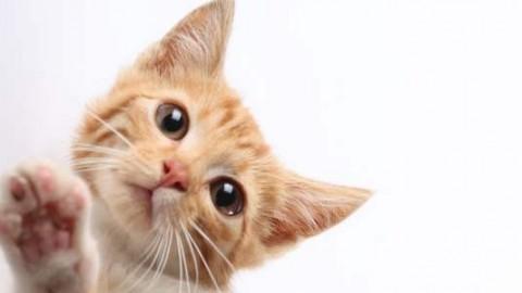 10 dolcissimi modi in cui i gatti ci dimostrano il loro affetto (VIDEO) – greenMe.it