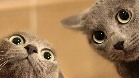 Le divertenti illustrazioni che solo chi ha un gatto può capire davvero – greenMe.it