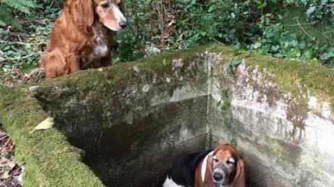 Cane fa la guardia per una settimana all'amico intrappolato, fino all … – greenMe.it