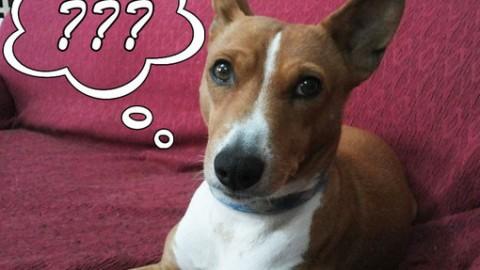 Come fanno a comunicare tra loro i cani? Scopriamolo insieme – TargatoCn.it