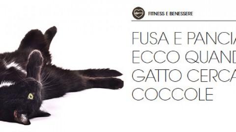 Gatto stressato? Troppe coccole! – Petpassion.tv