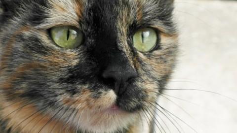 Il colore del mantello del gatto ha un legame col suo carattere? – Scienzamente (Blog)