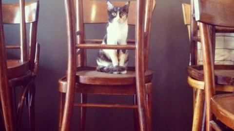 Più gatto-bar per tutti – Wired.it