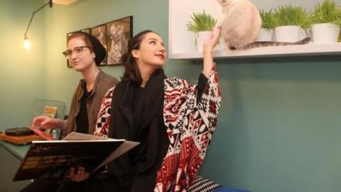 Benvenuti al bistrot a misura di gatto – Corriere della Sera