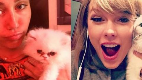 """Miley Cyrus VS Taylor Swift: Giornata del Gatto, chi è la """"gattara … – meltyfan.it"""