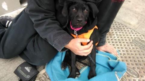 Polizia municipale: sequestrati tre cuccioli di cane usati per mendicare – Comune di Venezia