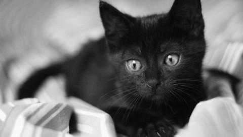 Halloween, salva il tuo gatto dai riti satanici. Ecco i consigli per la … – Diregiovani