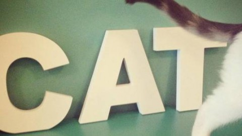 Crazy Cat Café: apre il primo bar dei gatti di Milano – greenMe.it
