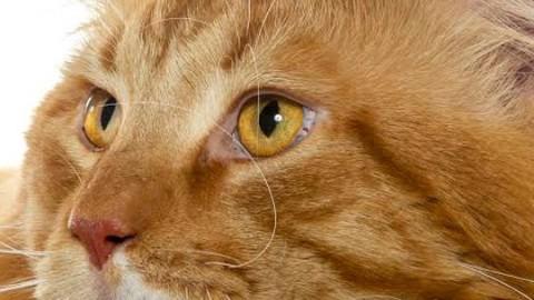 A Roma è Supercat show: gatti in mostra – IO donna