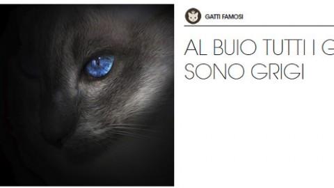Gatti grigi: carattere e personalità – Petpassion.tv