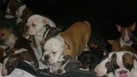 Spaventati e denutriti: fermata auto con 29 cuccioli di cane nel … – Il Gazzettino