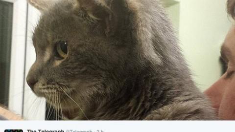 Trovato gatto con tre orecchie – GreenStyle