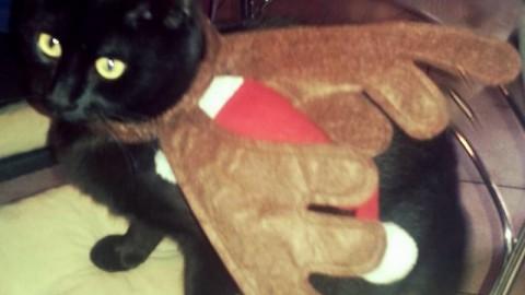 Ecco i vostri bellissimi gatti neri / 3 – La Nazione