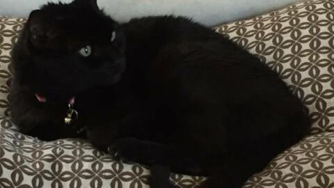 Il 17 novembre è la giornata del gatto nero: ecco le foto dei vostri mici – La Nazione