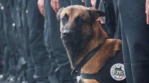 """Giardino in Italia intitolato a Diesel, il cane ucciso dai terroristi: """"E' un … – Today"""