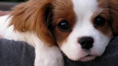 Se guardi un cane negli occhi produci l'ormone dell'amore: lo … – Liveunict