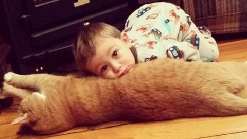 La tenera amicizia tra un gatto abbandonato e il bambino che lo ha … – greenMe.it