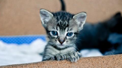9 domande da porsi prima di adottare un gatto – Petpassion.tv