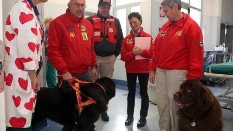 Al e Reff, i cani Terranova – Corriere della Sera