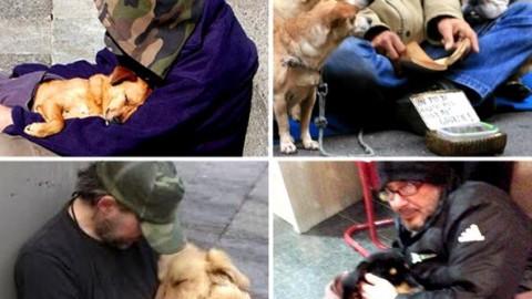 Appello per i senzatetto con il cane – Corriere della Sera