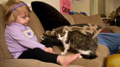 Doc, il gatto a 3 zampe adottato da Scarlette, una bimba che sa cosa … – Velvet Pets Italia (Blog)