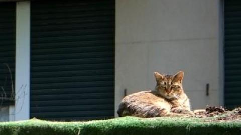 Sui Navigli a Milano il primo parco dedicato ai gatti – Adnkronos