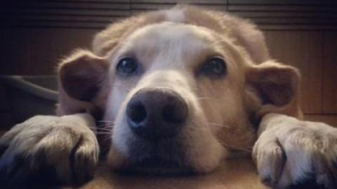 Psicologia a quattro zampe, quando anche il cane va in terapia – Adnkronos