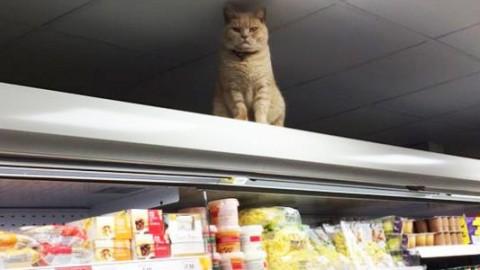 Olly, il gatto-commesso che si rifiuta di lasciare gli scaffali del … – greenMe.it