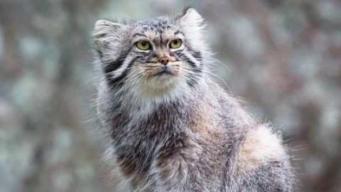 5 misteriosi gatti selvatici di cui forse non avete mai sentito parlare – greenMe.it