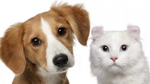 La fabbrica dei cuccioli: 10 cose da sapere prima di scegliere un … – greenMe.it